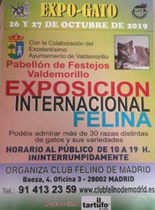 Cerca de 200 gatos de todas las razas,  este fin de semana en Valdemorillo  en su estreno como sede de la Exposición Internacional Felina